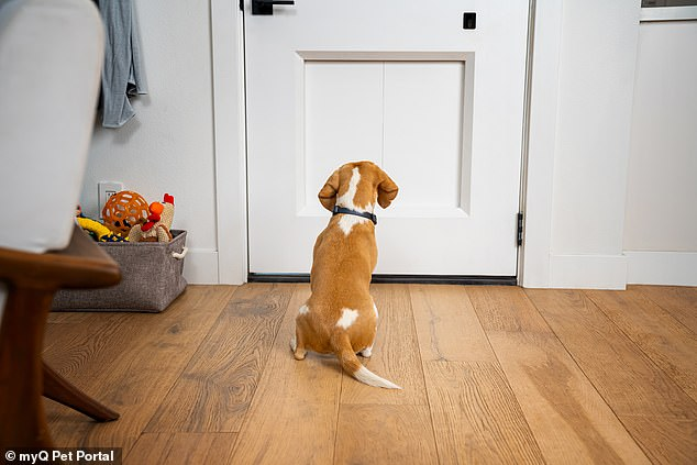 The myQ Pet Portal replaces the old-fashioned doggie door flap with a programmable sliding-door system built into your house's front door.