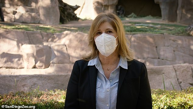 Park executive director Lisa Peterson said eight gorillas who live together in the park are carrying the virus and several are coughing.