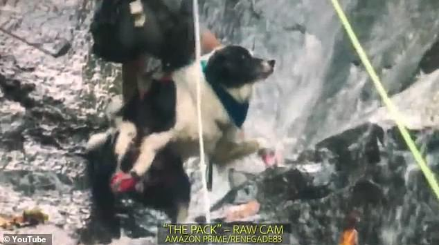 Images show dogs slamming into a cliff face in Costa Rica while strapped into harnesses
