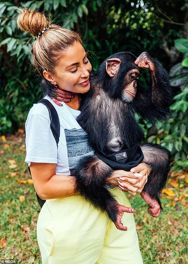 Cute:The group had a more relaxed encounter with a group of baby chimpanzees, including six-month-old Tara and 18-month-old Agnada