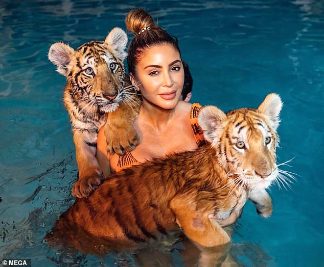 No fear: Larsa Pippen, 46, went swimming with the tigers on Wednesday during a family trip to the Myrtle Beach Safari in South Carolina