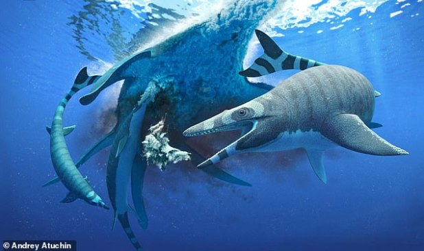 Researchers have found that the fossilized remains of a new species of Mugasaur - an ancient sea lizard from the age of dinosaurs