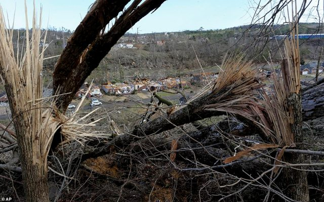 Tree limbs partially obscure an overhead view of a series of homes that were damaged in the twister