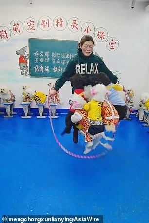 A group of poodles in China impressed social media with their athletic prowess