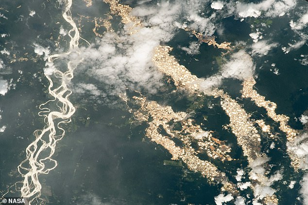 Rushing rivers and water-filled gold prospecting pits in the Amazon can be seen glistening in the sunlight in a shot taken from the International Space Station. Pictured: the view over Eastern Peru, showing the meandering Inambari River (right) and the gold pits (left). The tract of deforestation and mining shown in the centre of the image is some 10 miles (15 km) long