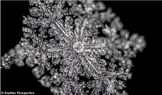 The stunning video not only gives us an up-close look at snowflakes, but is also a reminder that no two are the same. Pictured is the snowflake completed back to its original form