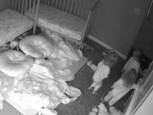 Two-year-old triplets in Georgia were seen interacting with a 'ghost' on their baby monitor