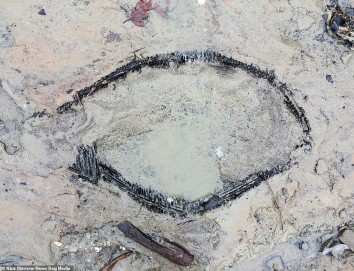 The remains of an Anglo Saxon fishing basket found by Mr Stevens in the mud on the River Thames in London. Britons have been mudlarking on the Thames since the 18th-Century, but this basket had gone unnoticed until Mr Stevens stumbled across it