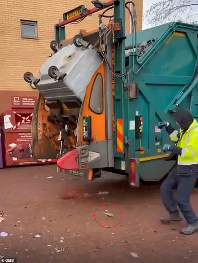 As the bin is lifted on the rear erector arms of the truck and raised towards the compactor, a large rat jumps to its freedom (circled)