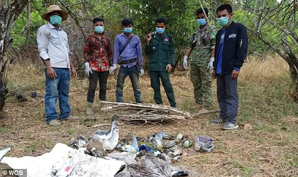 Dead birds and the remnants of poison recovered from the site in Cambodia. In the single poisoning event of April 9, between 1-2 per cent of the global giant ibis population was lost