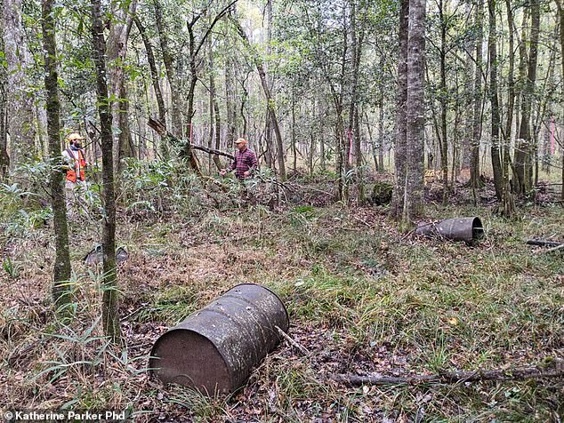 The volunteers found the still remnants less than a mile from the site of Ben Villeponteaux's home. Stills were frequently located near an operators' property, Parker reported, 'to protect the still from inadvertent discovery.' Pictured: Barrels used in the moonshine operation