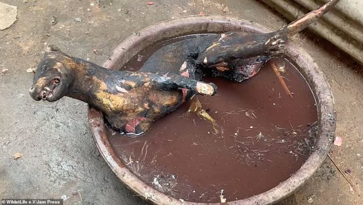 Pictured, a dog which was boiled alive. The charred and blackened rea=mains were identified by experts working with WildatLife