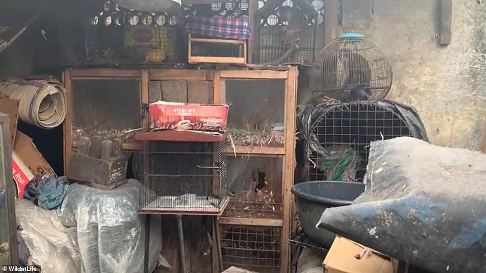 Monkeys are all kept in tiny cages close together at the wet market east of Lagos, Nigeria