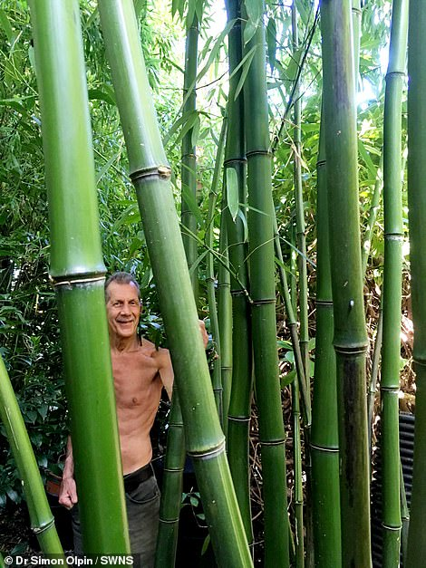 The bamboo has thrived in his beautiful Yorkshire garden