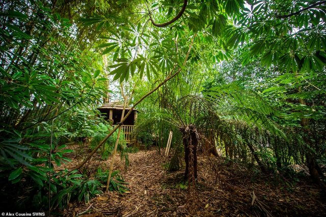 The garden in Sheffield began when Mr Olpin planted his first tree from a 'small pot' back in 1987 and it has since evolved into a large jungle-like space