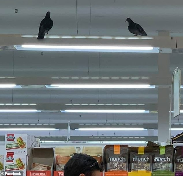 The shopper also filmed two pigeons (pictured above) hovering above the produce section