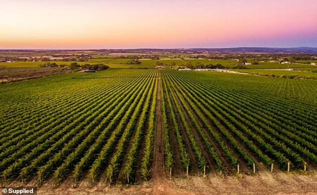 6. McLaren Vale, South Australia: The town is known for its cheesemaking, wine blending, a Shiraz trail, and more than 70 cellar doors