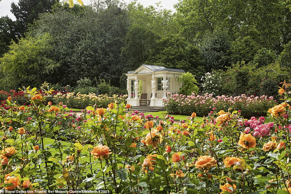 Some 24,000 guests usually traipse over the grass in the summer during the Queen's three garden parties, leaving the lawn in need of repair. Pictured: Buckingham Palace's rose garden, as revealed in the new book