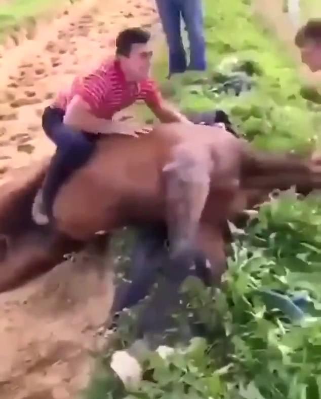 A sickening video last week showed the Irish amateur jockey posing astride a horse
