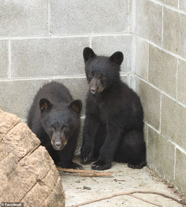 Meanwhile, the two cubs Casavant refused to kill were rehabilitated and named Jordan and Athena