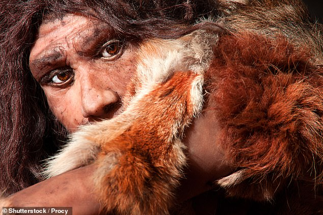 Neanderthal remains from Belgium have long puzzled scientists, according to the Oxford team, as fossil remains from the key site of Spy Cave suggested there were members of the nominin species living in the region 37,000 years ago