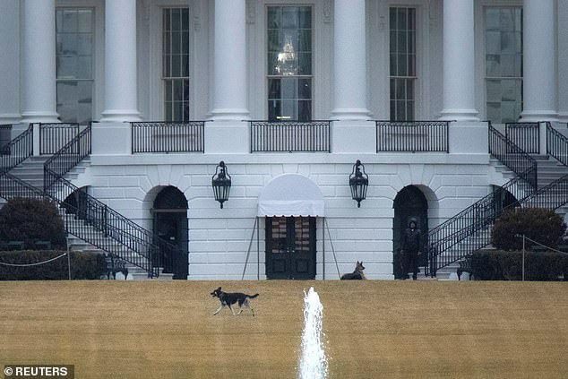 The dogs have been allowed to roam unleashed on the White House grounds