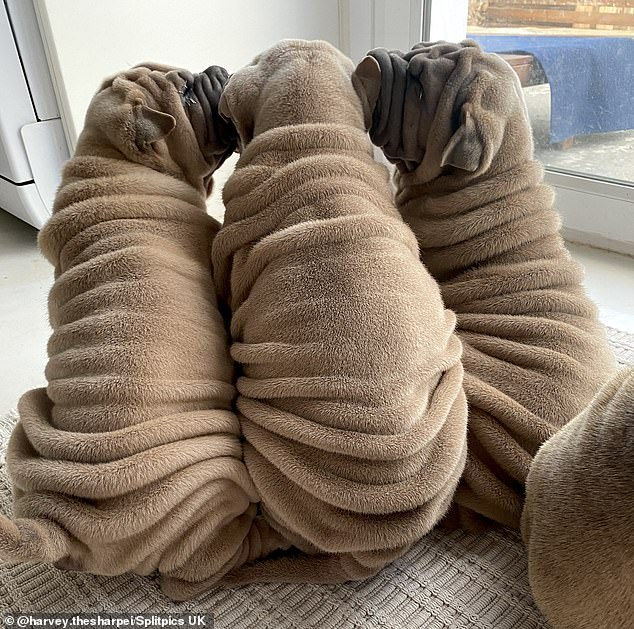 Siblings Dona, Harvey and Louis show off their adorable back rollers (left to right)