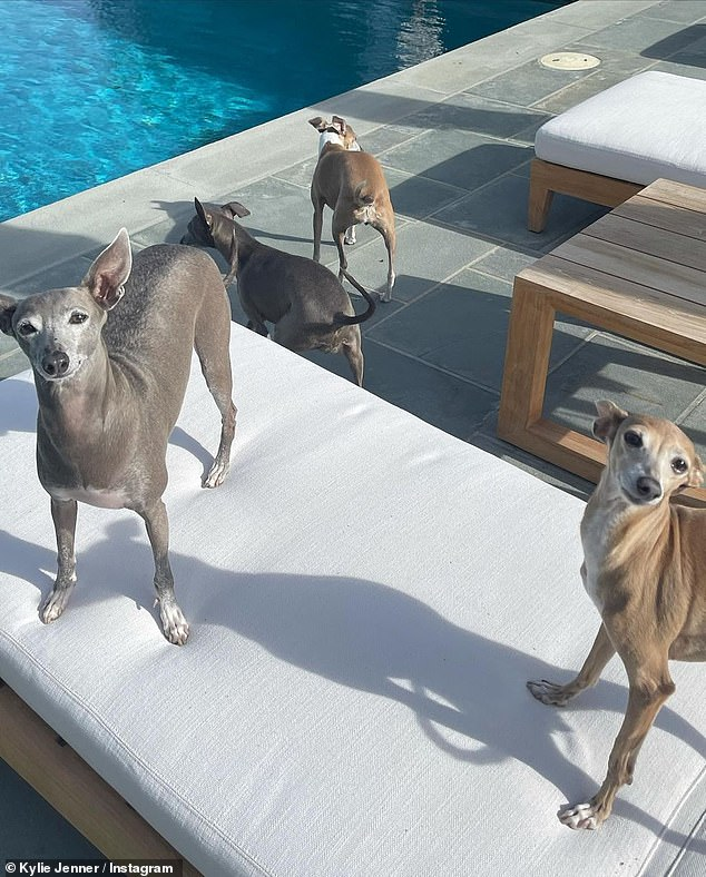 Puppy love:To round out her 'photo dump,' Kylie paid homage to her gang of sweet greyhounds