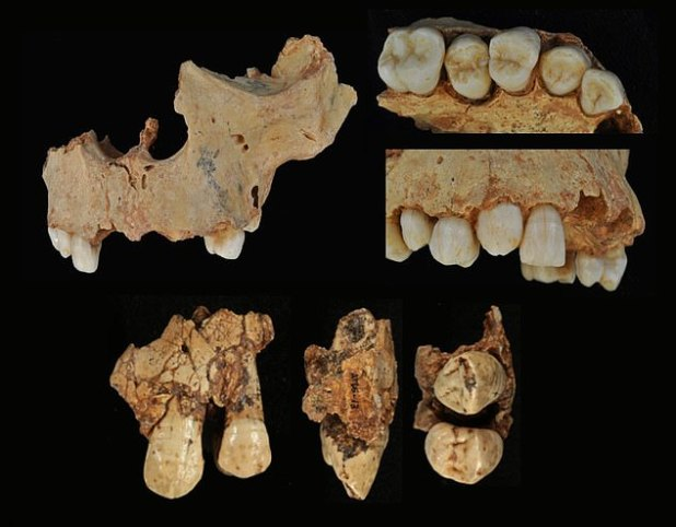 The gender change for the skeleton, formerly known as El Niño de Gran Dolina, came after researchers used modern techniques to analyze dental tissues.
