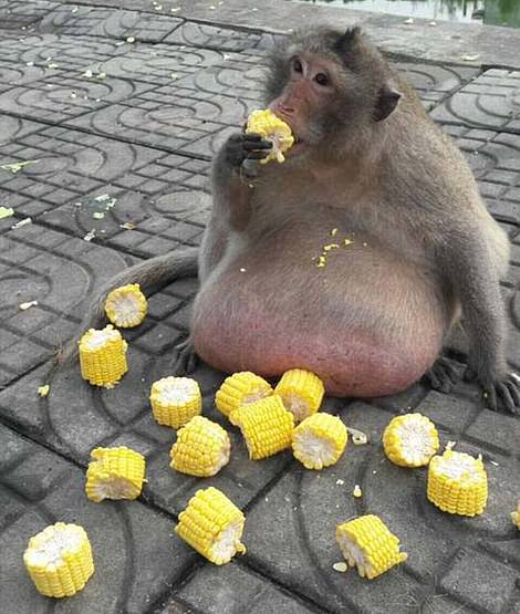 Uncle Fatty (pictured) weighed more than a quarter and is now presumed dead