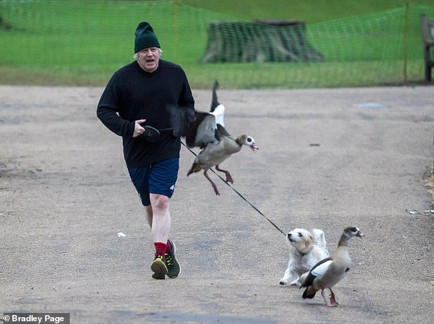 Mr Johnson has lost 'quite a lot of weight' on a fitness kick triggered by his battle with Covid. He is pictured on a jog today in Westminster with Dilyn, who is chasing Egyptian Geese