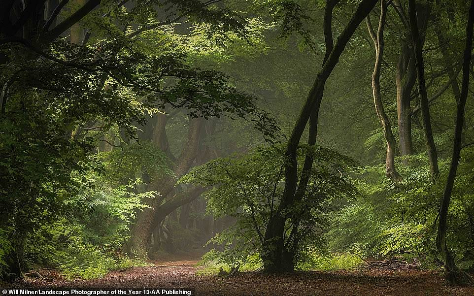 This image, taken in Buckinghamshire and called Mirkwood, was an entry in the Your View adult class category in the 2020 LandscapePhotographer of the Year competition. Photographer Will Milner said: 'A lovely little scene, reminiscent of the fictional Mirkwood in J R R Tolkien's Lord of the Rings series of novels. The interplay between sunlight, foliage and mist stopped me in my tracks'