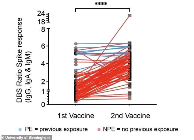 For people who had already caught coronavirus before getting the Pfizer vaccine, antibody levels peaked at the first dose (blue lines). For people who had never had the virus, protection started after the first dose and was boosted by the second (red lines)