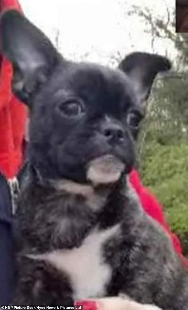 Julie Borland's 13-week-old puppy Kalli was snatched on Good Friday in Dartford, Kent