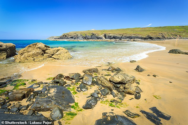 The unexplained discoveries of headless seals on beaches have sparked fears among nature lovers that people are killing and mutilating the marine creatures. Pictured: Cornwall beach