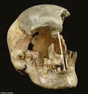 45,000 년 된 체코 두개골은 지금까지 발견 된 가장 오래된 인간 게놈입니다