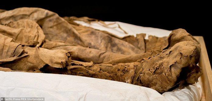 Análisis previo del obispo del siglo XVII, este hombre de Dios fue enterrado con los restos de un feto humano envuelto en tela y escondido entre sus pantorrillas (en la foto), y los investigadores han estado trabajando para resolver el enigma durante más de cinco años.