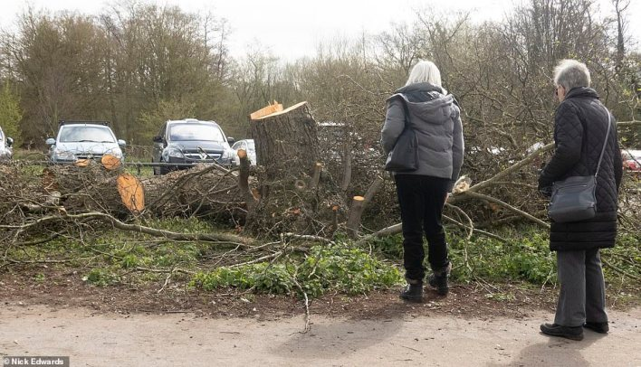 Local residents don't know why the person responsible is cutting down the ash, oak and elm trees but they may drive a small red car and are operating under the cover of darkness over a two-mile stretch between Walton and neighbouring Weybridge