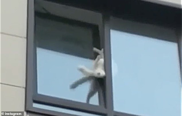 The scared pet struggled to get back inside its second floor home for more than an hour in the Russian city of Krasnodar