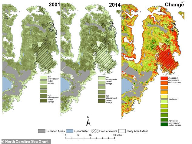 Pixels in the satellite images represent an area on the ground roughly the size of a baseball diamond. The images were then fed into an algorithm that was able to determine whether an area was thriving with living forests or dead trees