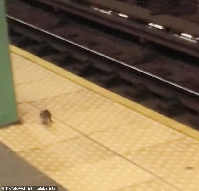 Rats are once against being spotted along NYC subway platforms