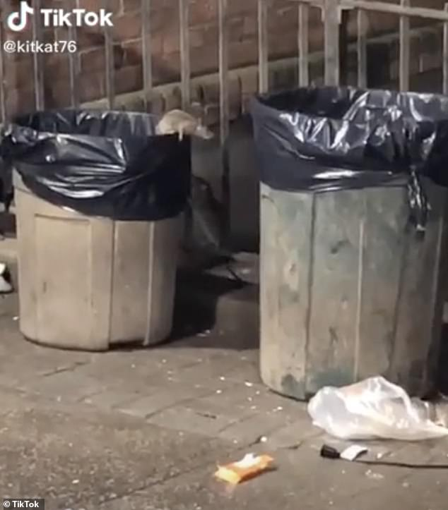 New York rat has a trash can all by itself