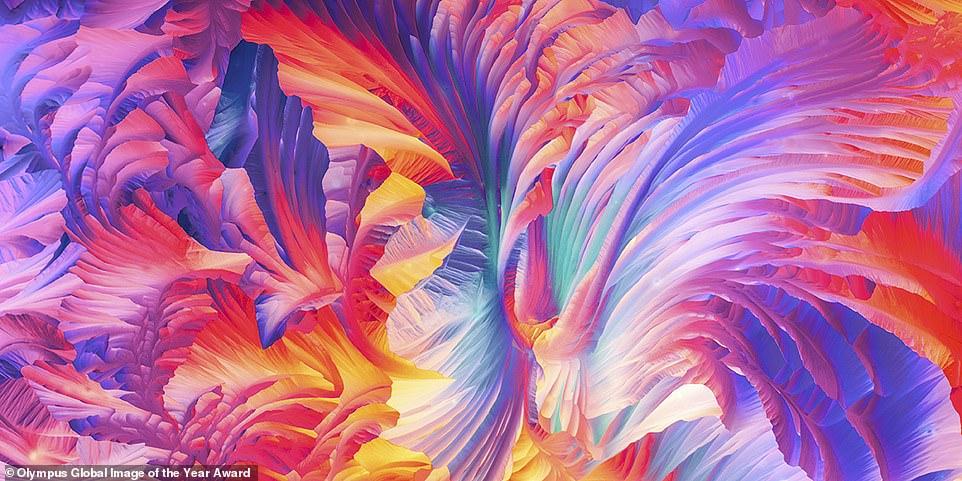 Justin Zoll, glutamin ve beta alanin kristallerinin güzel polarize ışık mikroskobu panoramasıyla Amerika bölgesel ödülünü kazandı.  Bu mikroskop, görüntünün kalitesini artıran kontrast artırıcı bir teknik kullanır.