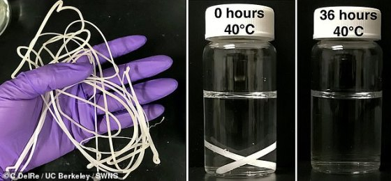 One modified plastic (left) - this one based on polycaprolactone with lipase enzymes - broke down in just two days in water heated to 104 ° F (40 ° C), as shown on the right