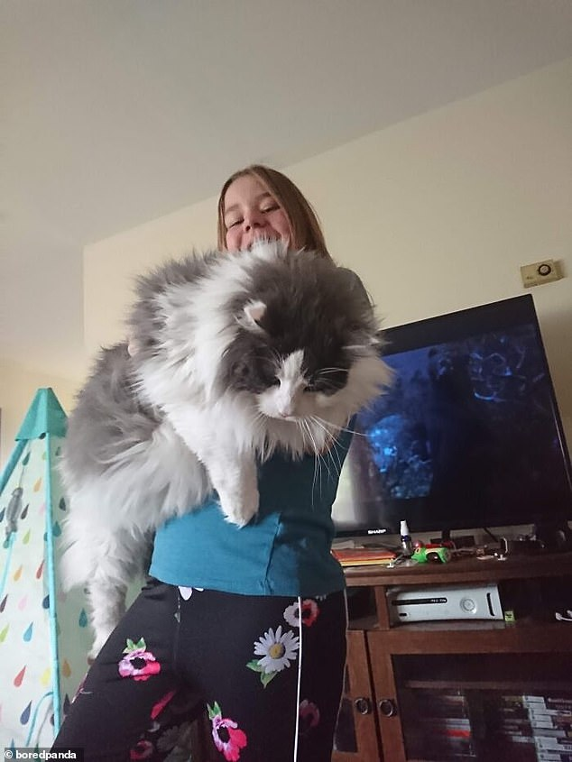 A user from the US posted a snap on Reddit of their huge cat, who was almost as big as they were and very, very fluffy