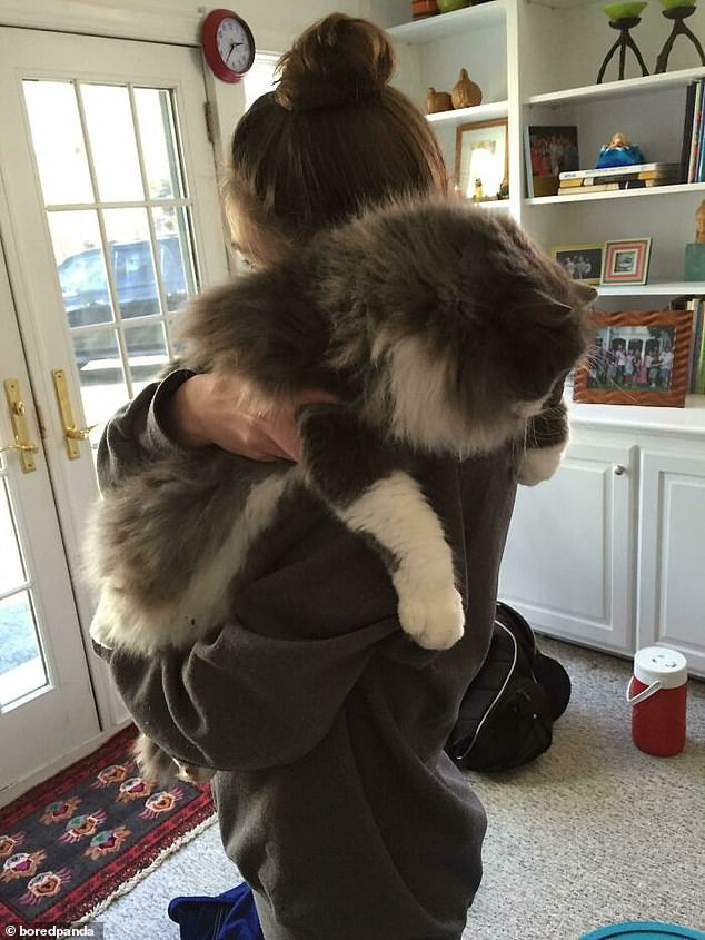 Another user shared a photo of an owner hugging their large cat, as they stood up and the cat draped its paws over her shoulder