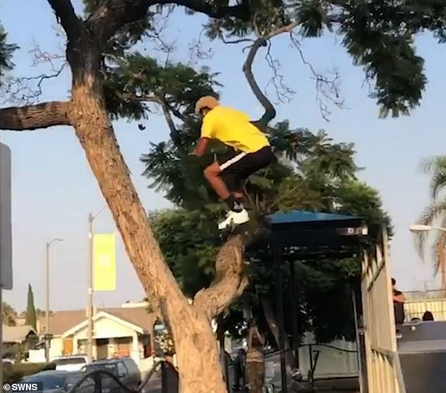 The daredevil takes off from the skating ramp and flies through the tree while holding on to his scooter