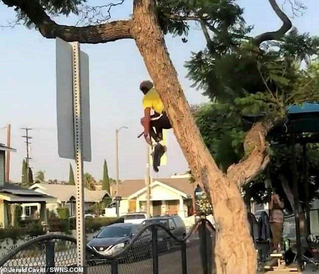 Mr Taylor gently taps the bottom of his scooter as he soars through the gap in the tree
