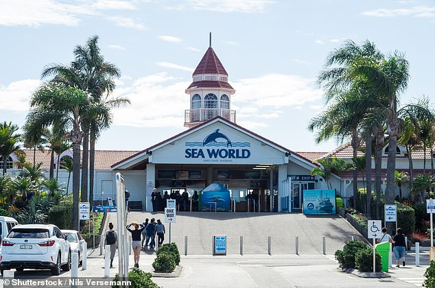 SeaWorld is a popular theme park for locals on the Gold Coast because of its close location