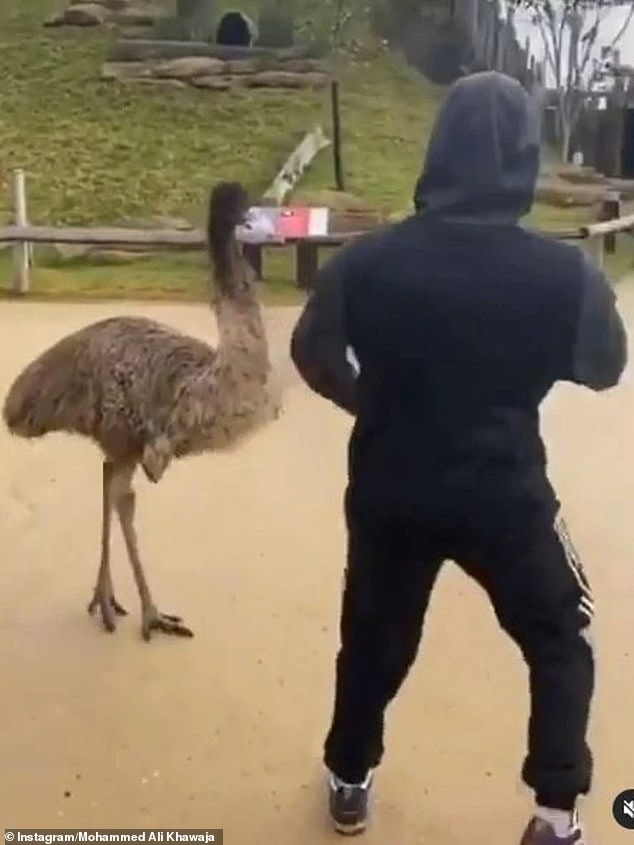 Mohammed Ali Khawaja was charged with multiple offences after the prankster (pictured) was filmed 'shadow boxing' an emu in late July last year at a zoo in Sydney's west